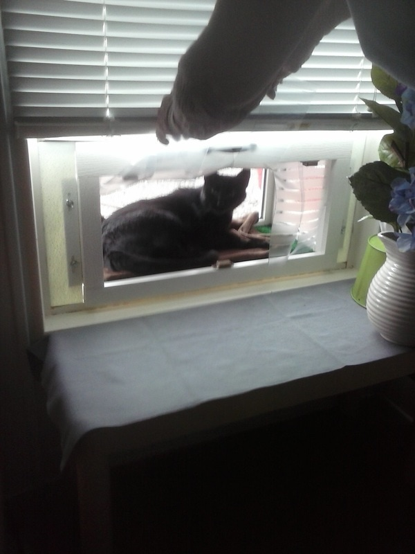 Cat House Attached To Window