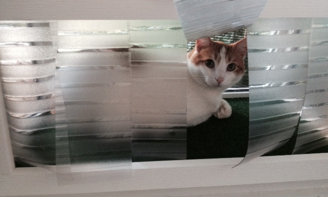 Cat Window Patios From Cwaa Crafts Bo And That Fit Into The Like An Air Conditioner Our Give Your Indoor